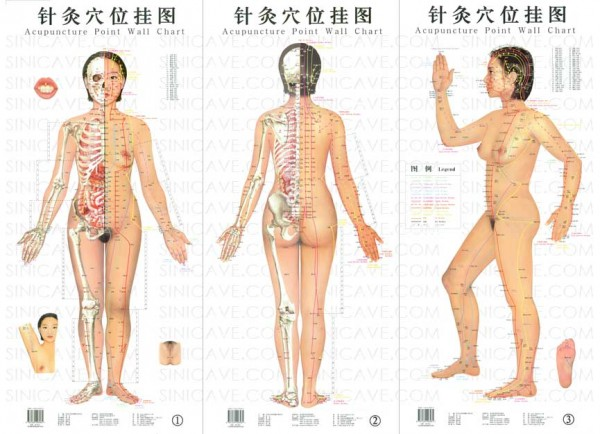 Acupuncture - meridians or energy pathways